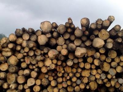 załadunek drewna 2